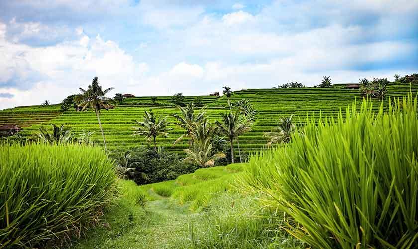 Impression Bali Landschaft