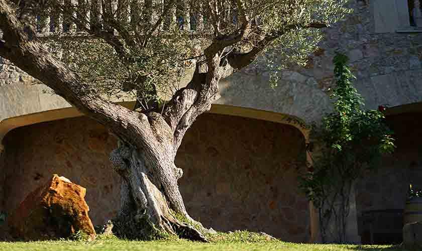 Garten Finca Mallorca Norden PM 3760