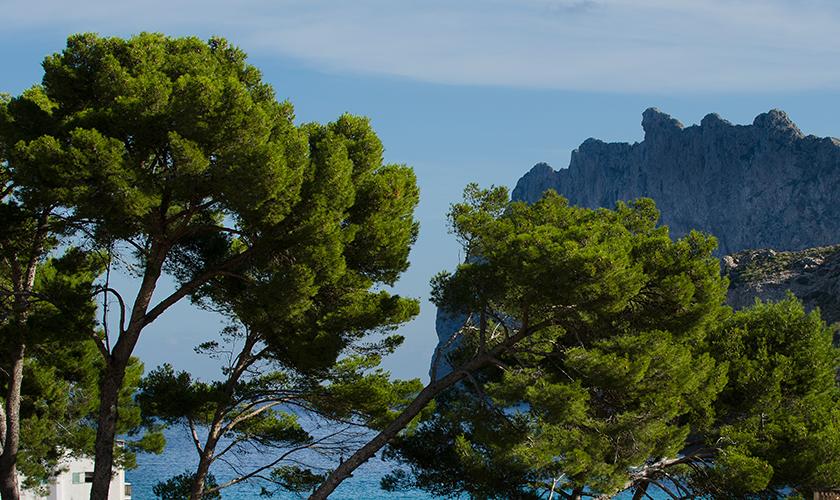 Landschaft Mallorca Ferienwohnung Strandnähe PM 3853