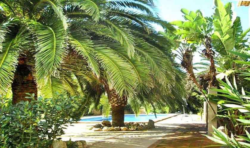 Garten Finca Mallorca Nordosten PM 5892