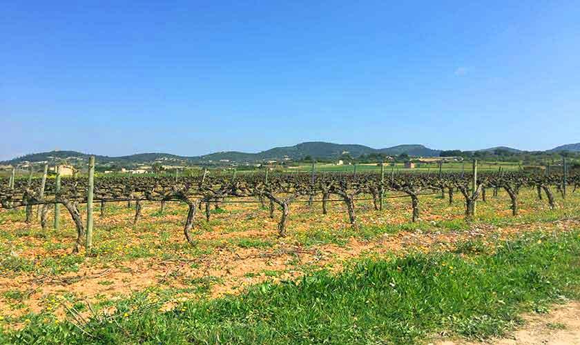 Landschaft Finca Mallorca Osten PM 6014