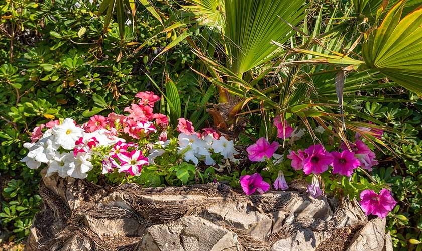 Garten Ferienvilla Mallorca PM 6532