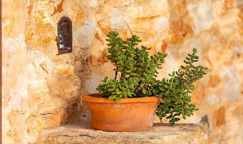 Blumentopf Ferienfinca Mallorca PM 6538