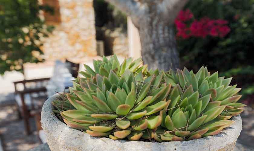 Terrasse Finca Mallorca PM 6540