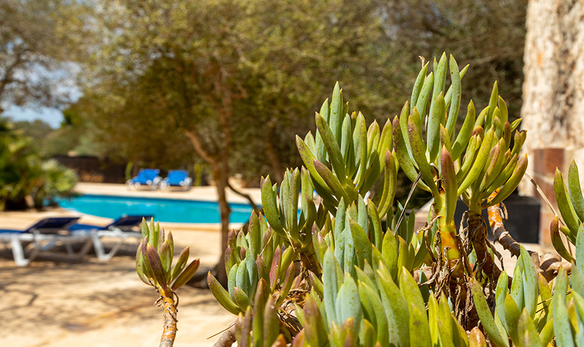 Pool und Garten Ferienhaus Mallorca PM 6546
