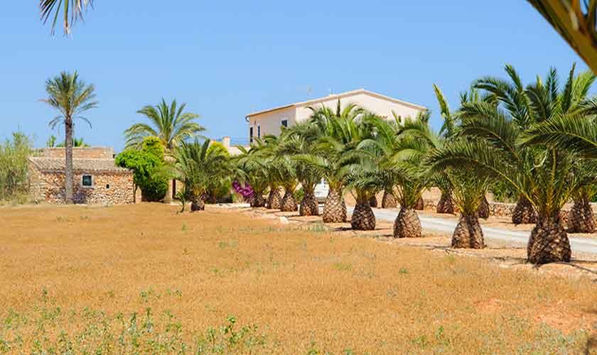 Blick auf die Finca Mallorca PM 6555