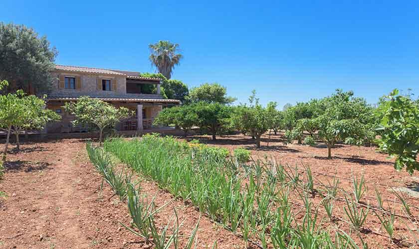 Gemüsegarten Finca Mallorca 8 Personen PM 6558