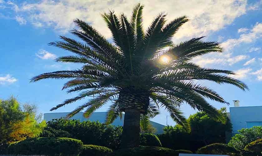 Gartenblick von der Front Ferienhaus Mallorca PM 6569