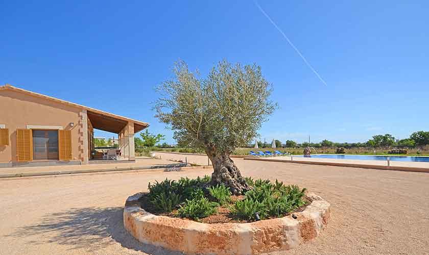 Blick auf die Finca Mallorca Campos PM 6920