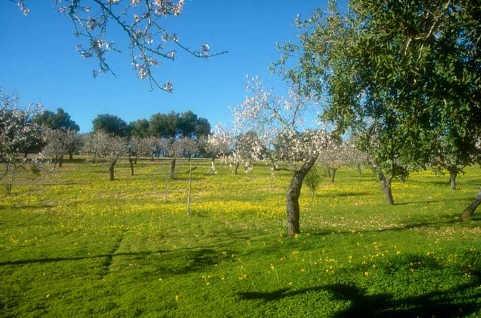 Landschaft Finca Mallorca 6 Personen PM 120
