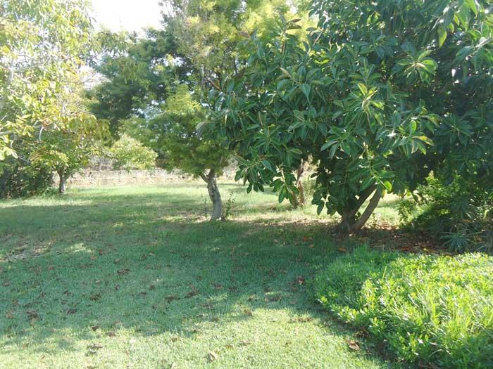 Garten der Finca Mallorca 8 Personen Pool PM 3798
