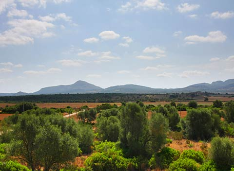 Blick auf die Landschaft Finca Mallorca PM 522