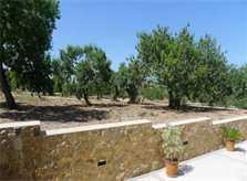 Blick in die Landschaft 2 Finca Mallorca mit Pool und Klimaanlage PM 5915