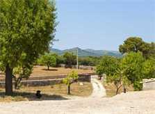 Landschaft Finca Mallorca PM 5925