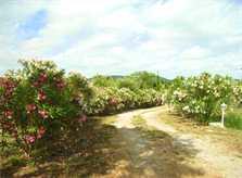 Einfahrt mit Blumen Finca Mallorca für 12 Personen mit Pool PM 597