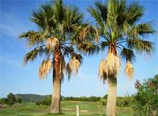 Pula Golfplatz Nähe Finca Mallorca für 12 Personen mit Pool PM 597