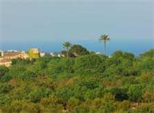 Blick in die Landschaft Finca Mallorca mit 2 Wohneinheiten für 8 - 14 Personen PM 626
