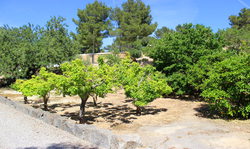 Garten Finca Ibiza IBZ 35