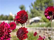 Garten Finca Mallorca Westküste PM 225