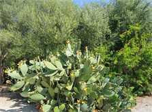 Garten Finca Mallorca PM 303