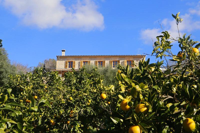 Blick auf Orangenhaine und Finca Mallorca PM 3062 für 8 Personen