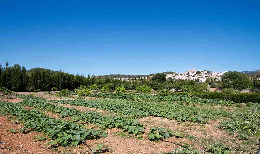 Gemüsegarten der Ferienfinca Mallorca PM 3115