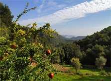 Landschaft  Finca Mallorca Pollensa PM 3334