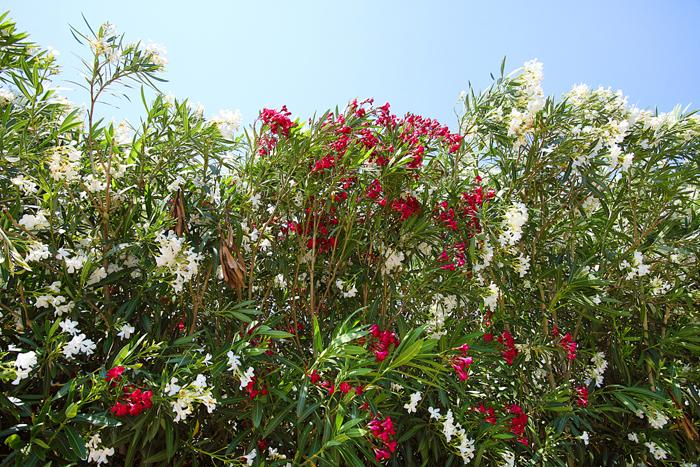 Blumen Finca Mallorca  mit Pool im Norden PM 3403 für 6 Personen