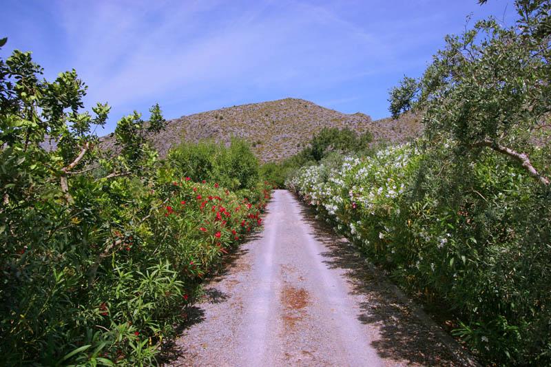 Einfahrt zur Finca Mallorca Norden PM 3411