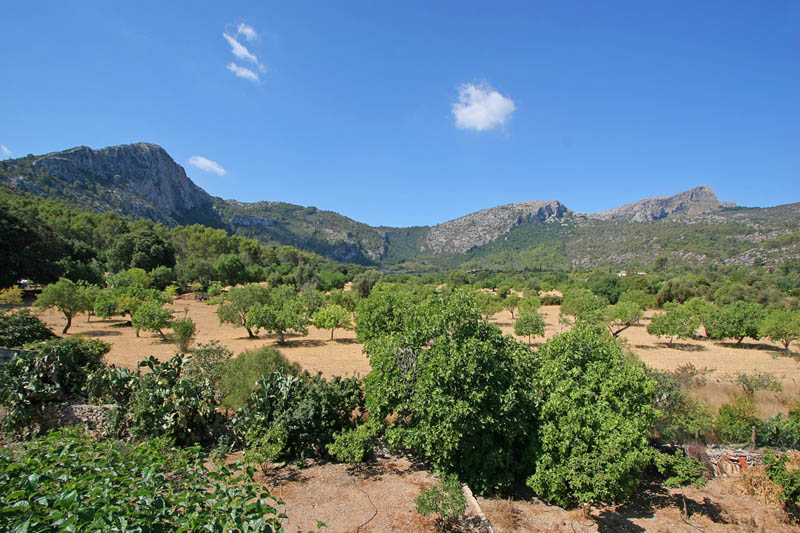 Blick von der  Finca Mallorca 8 Personen PM 3414