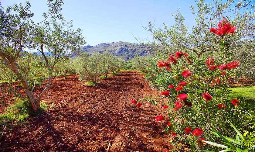 Garten Ferienhaus Mallorca Norden PM 3429