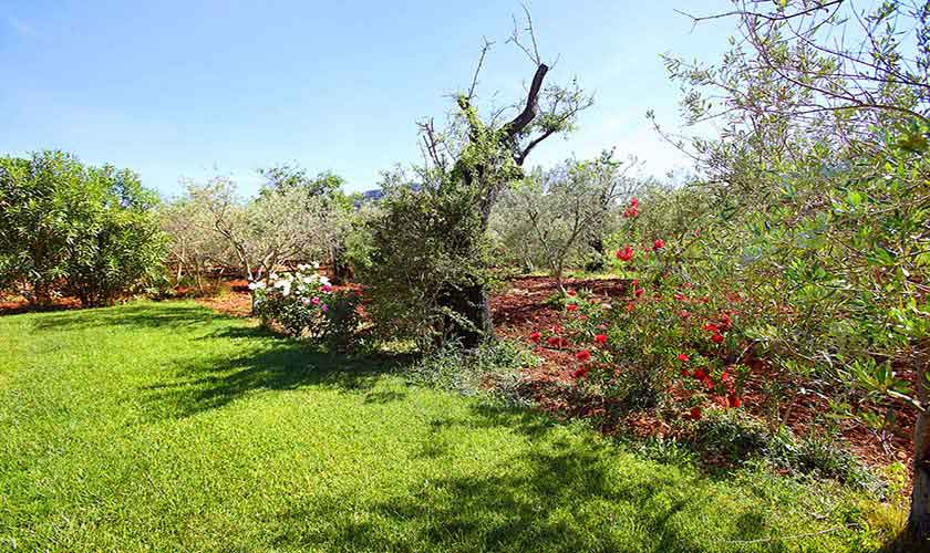 Rasenflächen Finca Mallorca für 6 Personen PM 3429