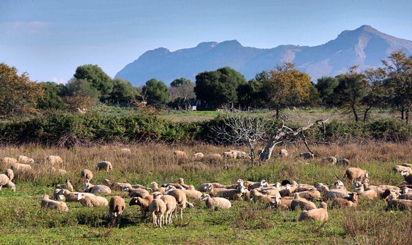 Blick in die Landschaft Ferienvilla  Mallorca Norden PM 370