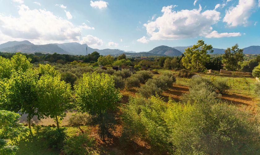 Landschaft Finca Mallorca 4 Personen PM 3835
