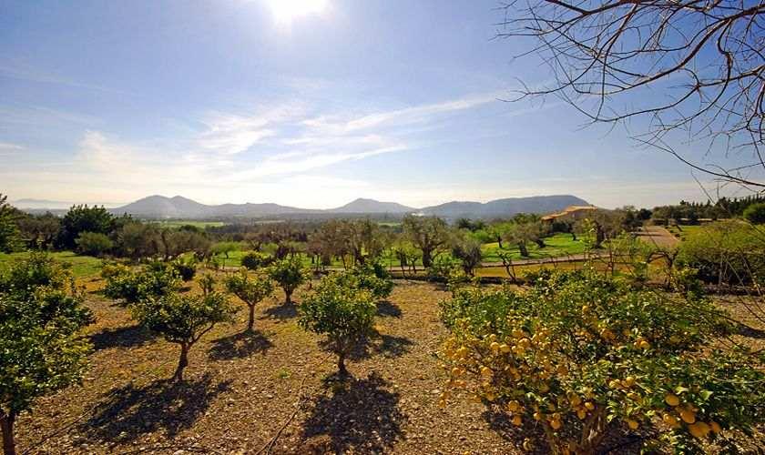 Landschaft Finca Mallorca PM 384 für 10 Personen