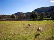Landschaft Ferienfinca Mallorca für 8 Personen PM 398