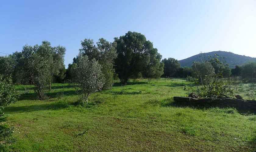 Landschaft Finca Mallorca Nordosten PM 5208