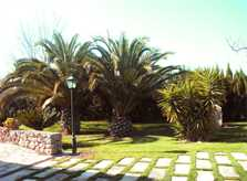 Garten Ferienfinca Mallorca Nordosten PM 5372