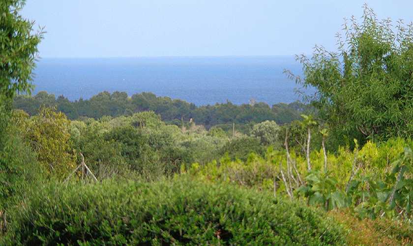 Blick Finca Mallorca 4 Personen PM 564