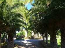 Palmen Ferienfinca Mallorca PM 5835