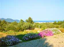 Landschaft Finca Mallorca 10 Personen PM 593