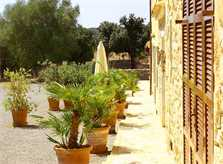 Blick auf die Finca Mallorca Son Suau Vell