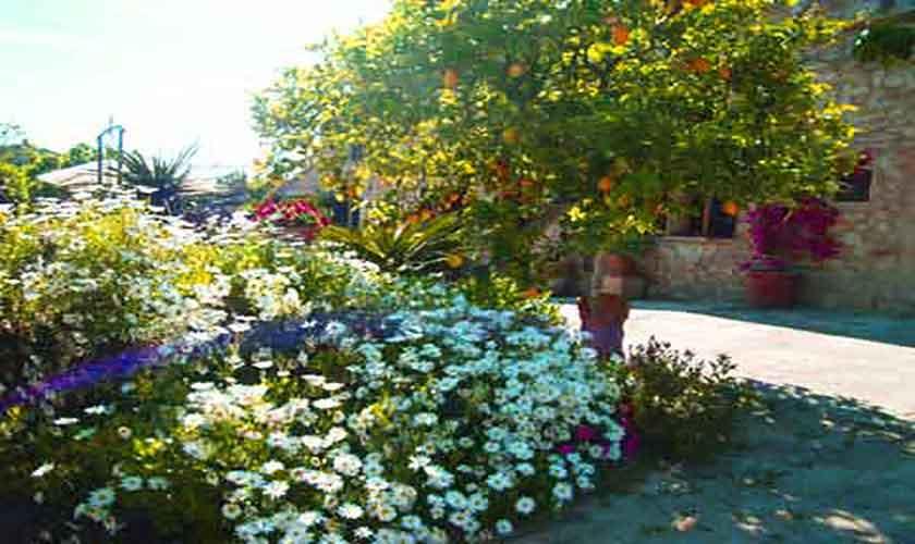 Garten Finca Mallorca 8 Personen PM 601
