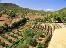 Blick in die Landschaft Finca Mallorca PM 6055 im Südosten für 10 Personen