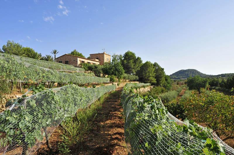 Weinberge der Finca Mallorca PM 6055 im Südosten für 10 Personen