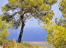 Blick bis zum Meer von der Ferienvilla Mallorca Südosten PM 6061