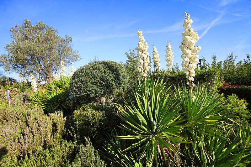 Garten Finca Mallorca PM 6062 im Südosten für 6-7 Personen