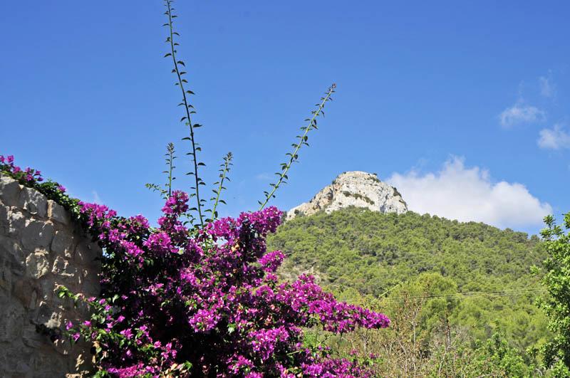 Garten Finca Mallorca mit Pool Südosten PM 6063
