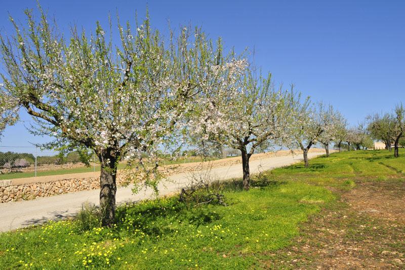 Landschaft Finca Mallorca Südosten PM 6076