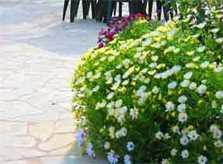 Garten Finca Mallorca 4 Personen PM 611